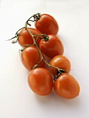Seven Plum Tomatoes on the Vine