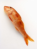 A Red Mullet