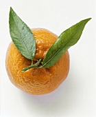 An Orange with Two Leaves