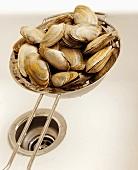 Muscheln im Sieb im Spülbecken