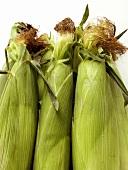 Three Fresh Ears of Corn
