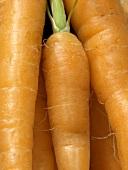 Carrots ( Full Frame )