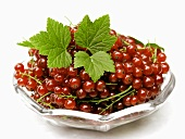 Red Currants in a Glass Dish