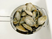 Clams in a Metal Strainer