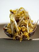 Bean Sprouts on a Spoon