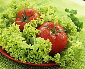 Salad ingredients: Lollo Biondo and tomatoes