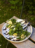 Fresh mackerel with lemon wedges and herbs