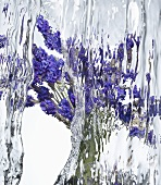 Lavender flowers under flowing water