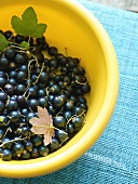 Blackcurrants in a plastic bowl