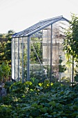 A greenhouse in a garden