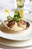 Grilled scallops served in their shells