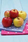 Organic apples (Cultivars: Cortland and Boiken)