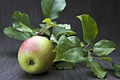 Apple with leaves