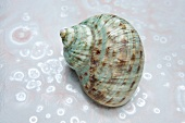 A green shell