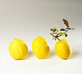 Three lemons, one with a stalk and leaves