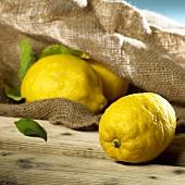 Lemons with a hessian sack