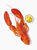 Whole Steamed Lobster with Melted Butter; From Above; White Background