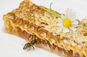 Honigwabe, Biene und Margerite