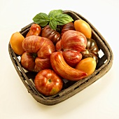 Basket with Heirloom Tomatoes; White Background; From Above