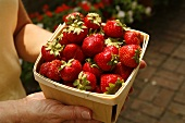 Person Carrying Wooden Basket of Fresh Organic Strawberries