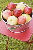 Fresh apples in a metal bowl on a garden table