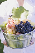 A woman holding a zinc bucket with various types of grapes
