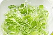 Green salad in water