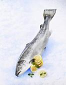 Fresh salmon with lemon slices