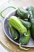 Fresh Picked Organic Cucumbers on a Metal Plate