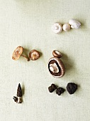 Assorted mushrooms (Champignons, Portobello, Morels, Truffles)