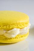 Macaroon with vanilla cream (close up)