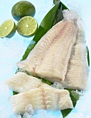 Fresh Wolffish fillets