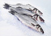 Three fresh sea bass on ice