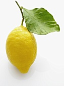 A lemon with leaf