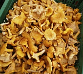 Crate of Chanterelle Mushrooms