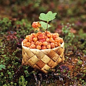 Cloud berries in a basket on a forest floor