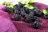 Fresh Blackberries on a Towel; Leaves