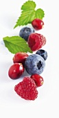 Raspberries, blueberries and cranberries with leaves