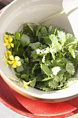 Fresh stinging nettle leaves in a bowl
