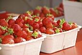 Strawberries in cardboard boxes