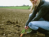 A woman pulling carrots out the soil