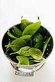 Freshly washed young spinach leaves in sieve