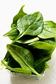 Washed young spinach leaves in plastic bowl