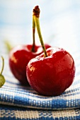 Two Red Cherries on a Stem