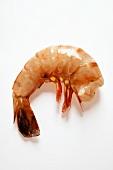 Shrimp without head