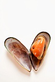 New Zealand mussel (opened)