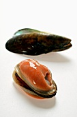 Shelled New Zealand mussel with mussel shells