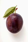 A plum with leaf