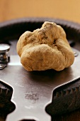 White truffle on truffle slicer