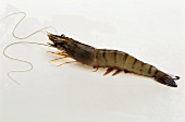 Fresh king prawn with head